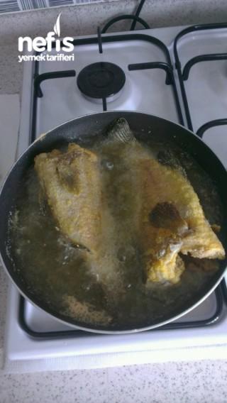 Kaya Lagosu Balığı