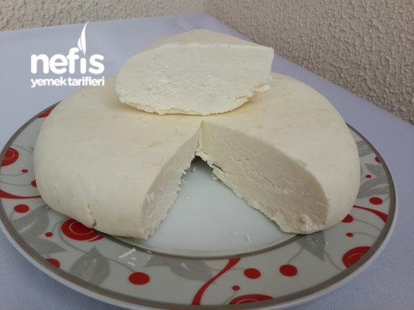 Evde Taze Peynir