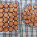 Şekerpare Tarifi fotoğrafı - Fatma