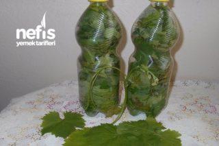 Pet Şişede Taze Asma Yaprağı Tarifi