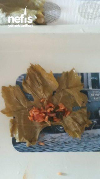 Yaprak Sarması ( Buzluk İçin )
