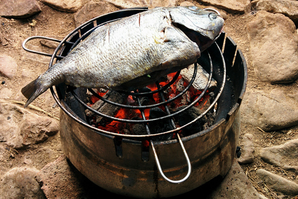 çipura balığı