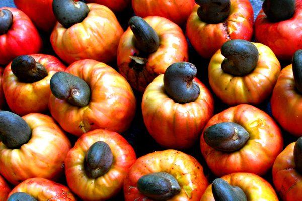 Kaju Meyvesi Nedir, Yenir Mi? Nerede Yetişir? Tarifi