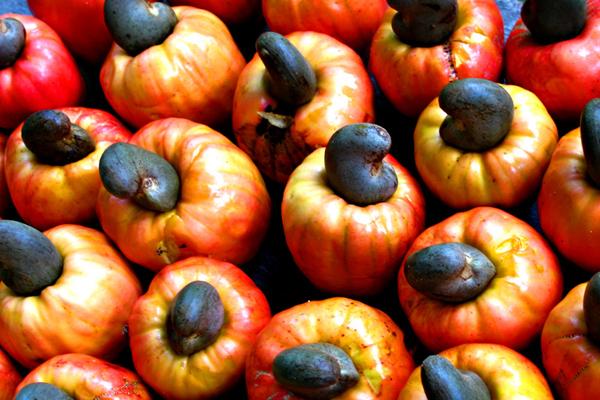 Kaju Meyvesi Nedir? Faydaları Nelerdir? Tarifi