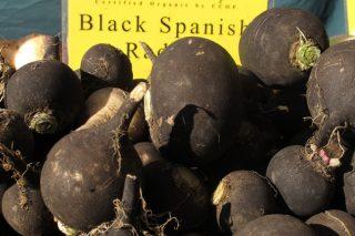 Siyah Turpun Faydaları Nelerdir? Kara Turp Bal Kürü Tarifi