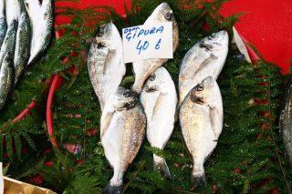 Çipura Balığı Kalori ve Besin Değeri, Faydaları, Nasıl Yapılır?