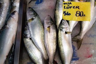 Lüfer Balığı Avı Nasıl Yapılır?