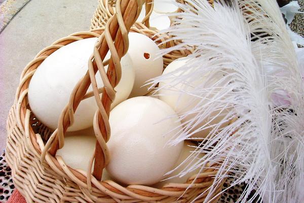 Deve Kuşu Yumurtası Fiyatı Ne Kadar? Faydaları, Ne İşe Yarar? Tarifi