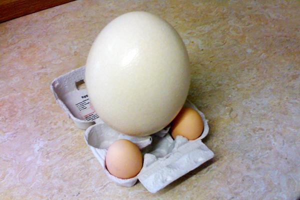deve kuşu yumurtası yenir mi