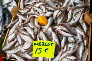 Mezgit Balığı Faydaları Nelerdir? Nasıl Temizlenir, Pişirilir? Tarifi