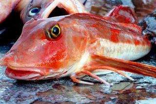 Kırlangıç Balığı Nasıl Yakalanır? Nasıl Temizlenir? Tarifi