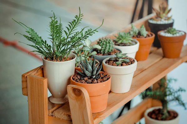 Ev Bitkileri İsimleri, Çeşitleri ve Bakımı İçin Püf Noktalar Tarifi