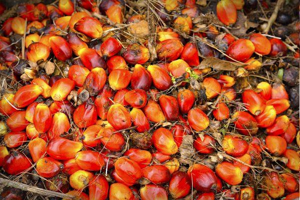 Palm Yağı Nedir? Zararları Nelerdir? Palm Yağı İçeren Ürünler Tarifi