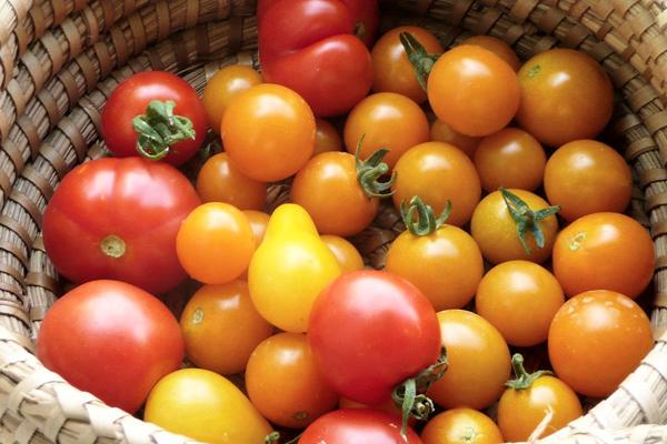 domates çeşitleri