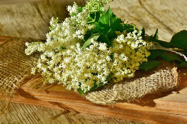 Mürver Çiçeği Faydaları Nelerdir? Çayı Neye İyi Gelir? Tarifi