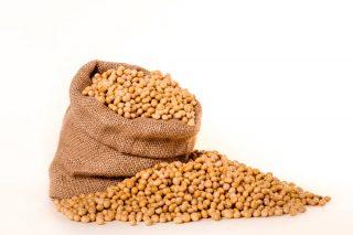 Soya Ürünleri Nelerdir? Soya Sosu, Sütü, Proteini ve Filizi Tarifi
