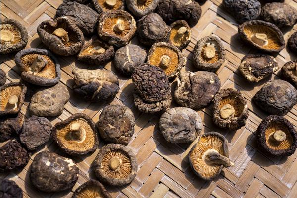 shiitake mantarı faydaları