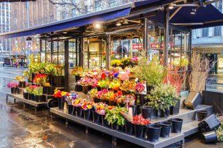 Çiçek Çeşitleri İsimleri, Anlamları ve Özellikleri – Bakımı Püf Noktaları Tarifi
