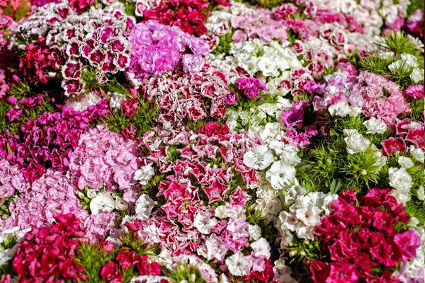 çiçek çeşitleri Isimleri Anlamları Ve özellikleri Bakımı Püf