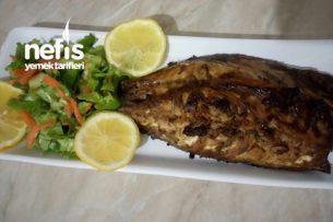 Bol Soslu Fırında Palamut Balığı Tarifi