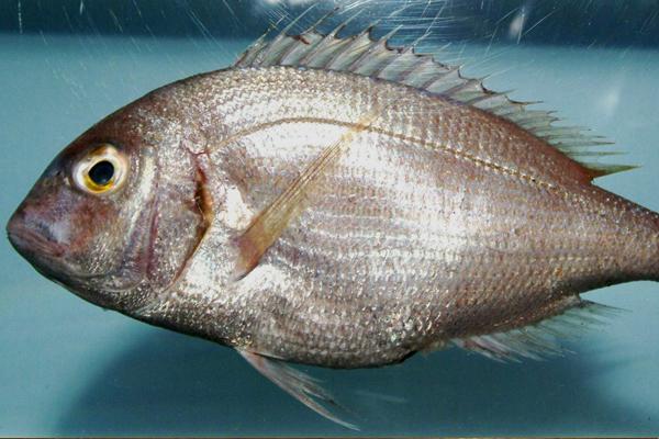 mercan balığı çeşitleri