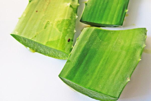 Aloe Vera Yağı Nasıl Yapılır, Kullanılır? Cilde Faydaları Nelerdir?