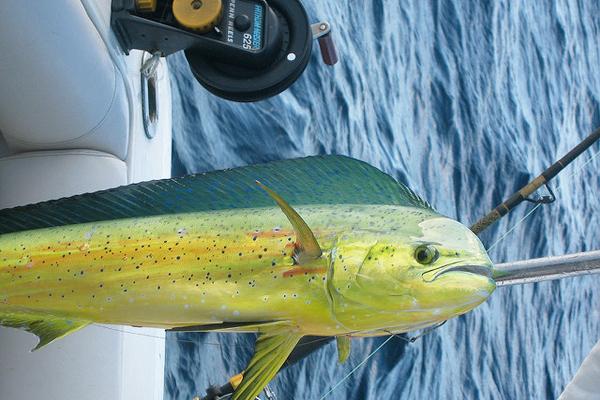 lambuka balığı avı