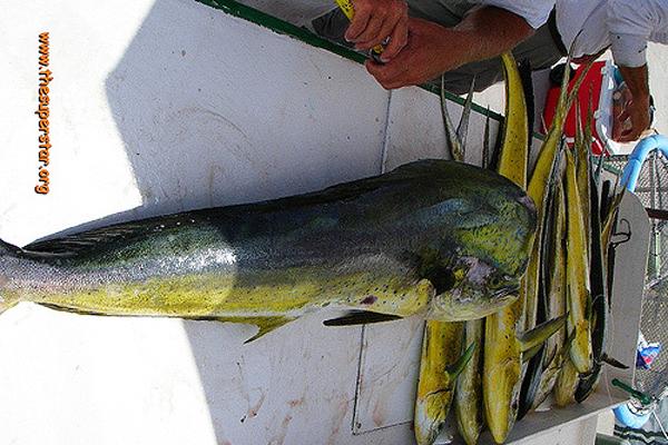 lambuka balığı nasıl pişirilir