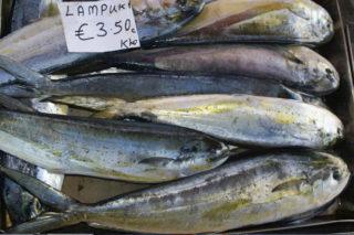 Lambuka Balığı Özellikleri, Avı ve Pişirme Teknikleri Tarifi