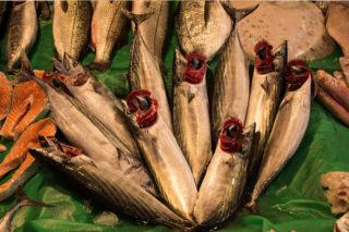 Torik Balığı Nasıl Pişirilir? Nasıl Avlanır? Tarifi