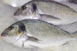 izmarit balığı