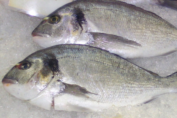 İzmarit Balığı Nasıl Pişirilir? Nasıl Tutulur? Tarifi