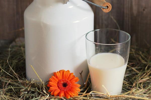 sütün faydası