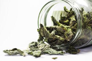 Yeşil Çayın Faydaları Nelerdir? Zayıflatır Mı? Ne Zaman İçilmeli? Tarifi