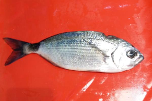 melanur balığı nasıl pişirilir