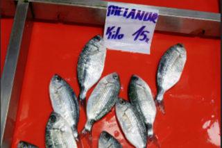 Melanur Balığı Avı, Pişirme Teknikleri ve Faydaları Tarifi
