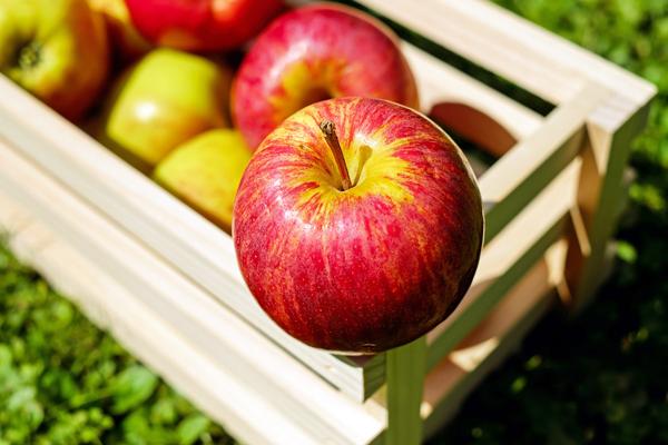 elma zayıflatır mı