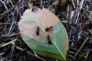 Karıncalardan Nasıl Kurtulunur? Evde 10 Pratik ve Etkili Yöntem Tarifi
