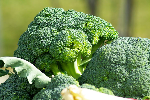 brokoli besin değeri