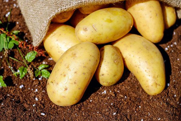 patates suyunun faydaları ibrahim saraçoğlu