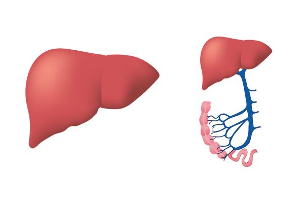 karaciğer büyümesi belirtileri