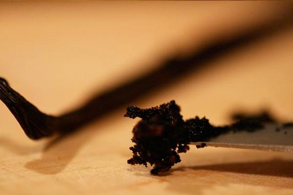 vanilya çubuğu