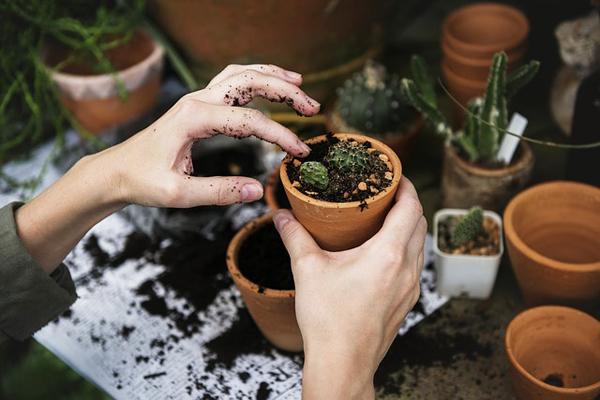 muz kabuğunun bitkilere faydaları