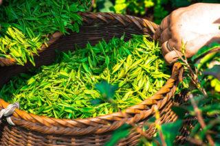 Şifalı Bitkiler: Her Derde Deva En Faydalı 10 Bitki, Kullanım Tavsiyeleri Tarifi