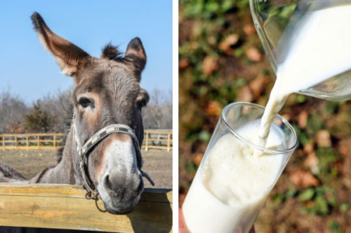 eşek sütü ile ilgili görsel sonucu