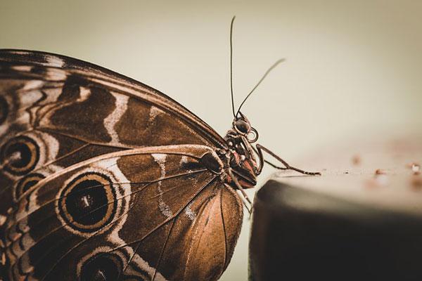Güve Nedir? Güve Kelebeği Neden Olur? Nasıl Yok Edilir, Önlenir? Tarifi