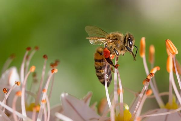polen nedir
