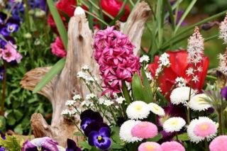 Kış Çiçekleri: Soğuk Havalarda Evinizi Renklendirecek 10 Çiçek Tarifi