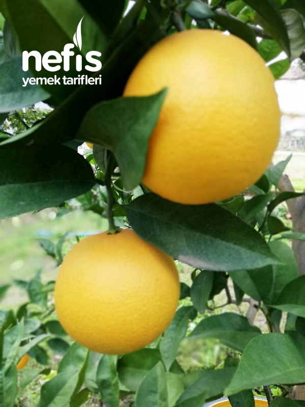 Portakallı Kurabiye