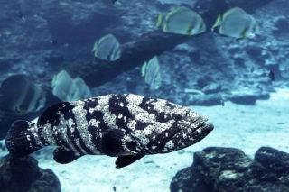 Morina Balığı Faydaları Nelerdir? Yağının Faydaları, Nerede Bulunur? Tarifi